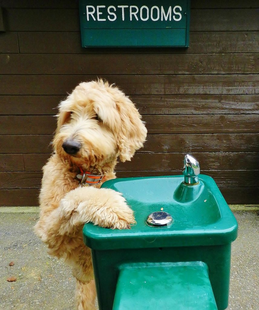 Goldendoodle Association of North America Committed to the Future of