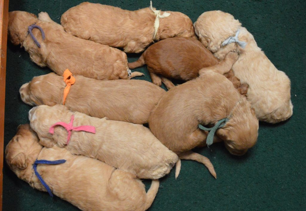Names For Fawn Colored Dogs